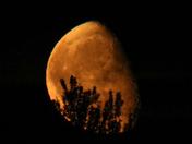Moon Elmswell