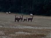 Walk near Harleston