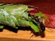 A leafy tail .