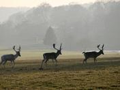 Project 52 Norfolk Parks - Holkham Park