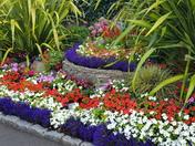 Colourful garden