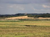 Harvest on the marshland edge