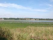 Low tide at Mistley