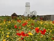 Project 52...coastal wildflowers
