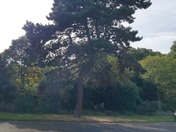 Trees in full summer foliage in Barking Park