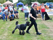 Bungay's Second Dog Show