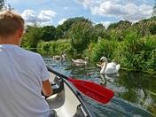 Canoe trip round Sudbury water meadows