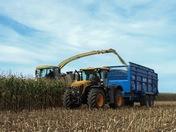 A maizing harvest