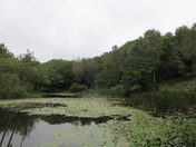 The pond at Offwell Woods