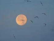 Moon set