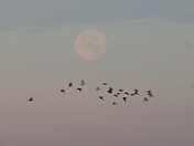 Lunar Light over The Wash at Snettisham