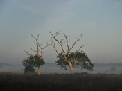 carlton marshes