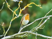 ROBIN IN WATERLOO PARK