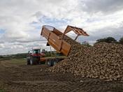 Summers end as Sugar beet harvest gets under way in Bury st Edmunds