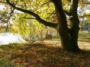 Fallen leaves herald end of Summer.