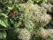 Autumnal colours in Heacham