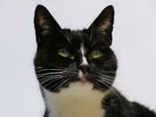 Photo Challenge.  Project 52.  Pets.