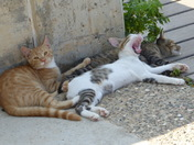 3 cats lazing about in shad