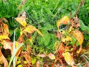 Autumn dew on cobwebs.( photo challenge)