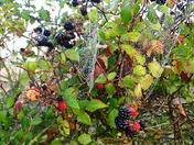 Autumn dew on cobwebs.