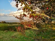 Autumn at Middle Hope looking across to Clevedon