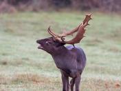 Bucks getting ready to rut