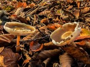 Fungi in Felbrigg Woods