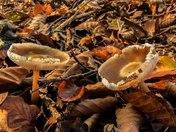 Fungi in Felbrigg Woods