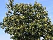 Autumn chestnut bonanza
