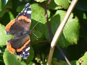 Butterfly and Dragonflies seen om my walk today