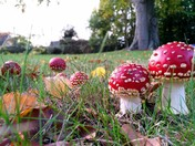 Autumn toadstools