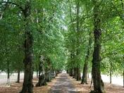 Tree line (leading lines)