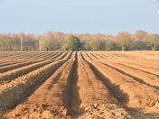 Lines in the field