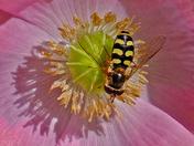 Taken in our garden