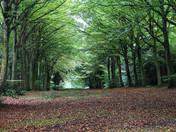 Felbrigg Woodland, water, plants