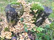 Cascading fungi