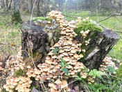 A waterfall of fungi