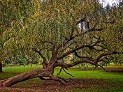 """The Fall of Salix Dinosauris"""
