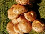Fungi ~ close up