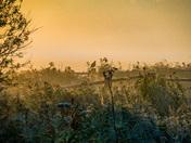 Misty Strumpshaw Sunrise