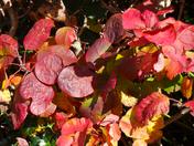 Autumn colour in my garden