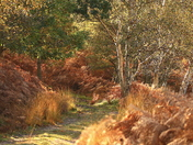 Dunwich In beautiful autumn colours.