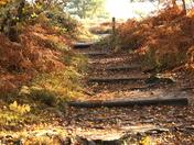 Dunwich In beautiful autumn colours.