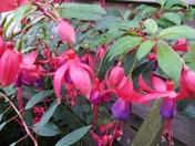 Colour around the garden