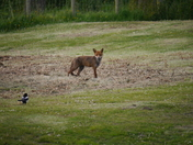 Our dog & local wildlife