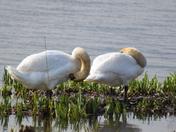 Birds on the Strand, Wherstead.