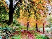 Blickling Wood.