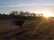 playford pastures
