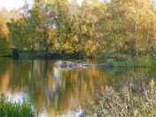 AUTUMN REFLECTIONS AT PENSTHORPE
