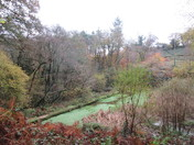 The pond at Holyford Woods Local Nature Reserve